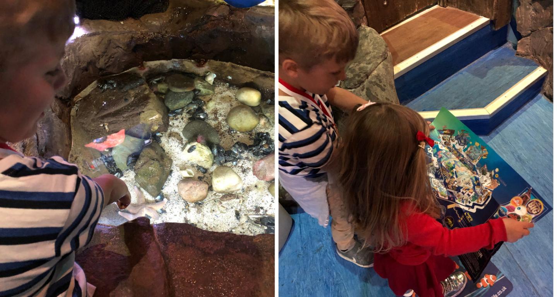 Sea Life Blackpool rock pool