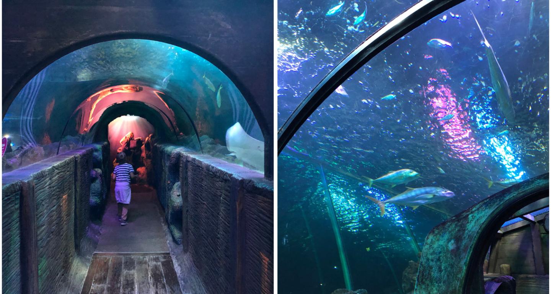 Sea Life Blackpool shark tunnel
