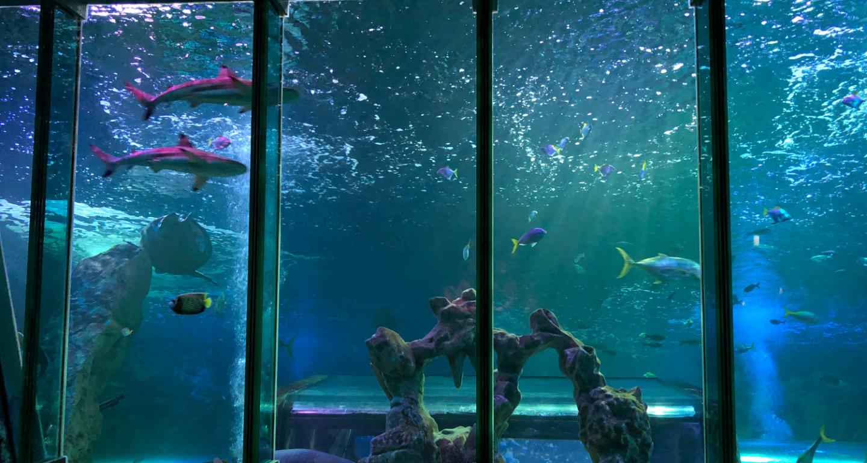 Sea Life Blackpool shark tank